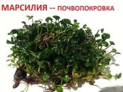 марсилия - ПОЧВОПОКРОВКА и др. - НАБОРЫ растений для запуска