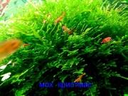 Мох крисмас и др. растения - НАБОРЫ растений для запуска