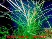 Погостеон октопус и др. растения -- НАБОРЫ растений для запуска- -