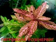 Гигрофила розенервиг и др. НАБОРЫ растений для запуска. ПОЧТОЙ вышлю
