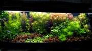 Удобрения(микро,  макро,  калий,  железо) для аквариумных растений.. ПОЧ+