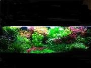 Удобрения(микро,  макро,  калий,  железо) для аквариумных растений. ПОЧТ9