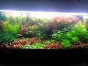 Удобрения(микро,  макро,  калий,  железо) для аквариумных растений. ПОЧТ4