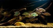 Аквариумные рыбки,  в Наличии.
