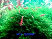 Мох феникс. НАБОРЫ растений для запуска акваса. ПОЧТОЙ отправл/