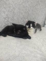 Красивые котята ищут дом и любящих хозяев       .....