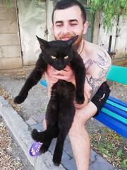 Котик милашка ищет дом  и любящих хозяев.......